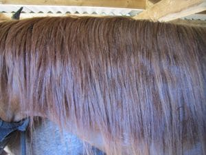 Horsehair with the detangling