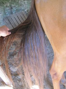 Tail after the detangling