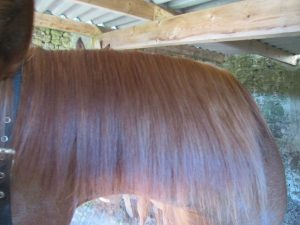 Horsehair after the detangling