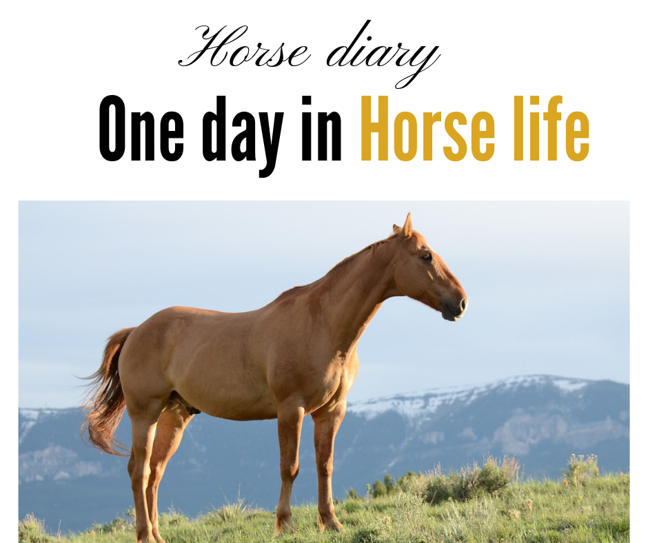 Horse diary, one day in horse life